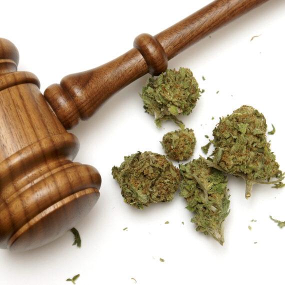 Marijuana Offenses